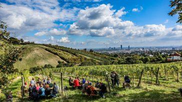 Gelegenheit für einen Spaziergang in den malerischen Wiener Weinbergen.
