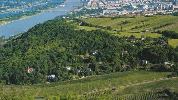 Blick auf Wien vom Leopoldsberg, Donau und Neue Donau über die Weingärten am Nussberg