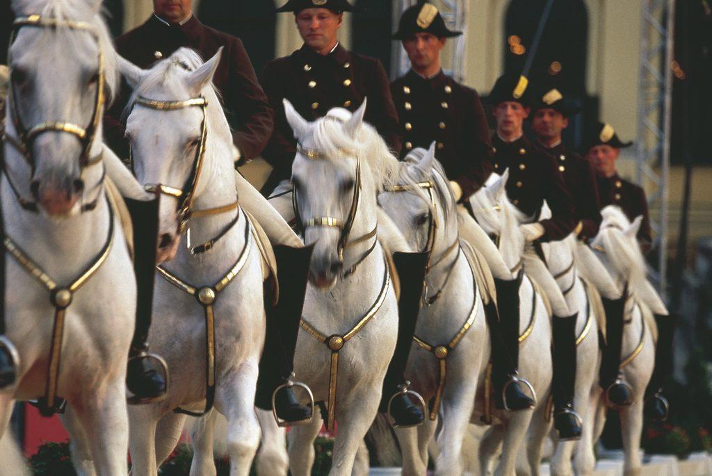 Die Spanische Hofreitschule, Pferde und ihre Reiter