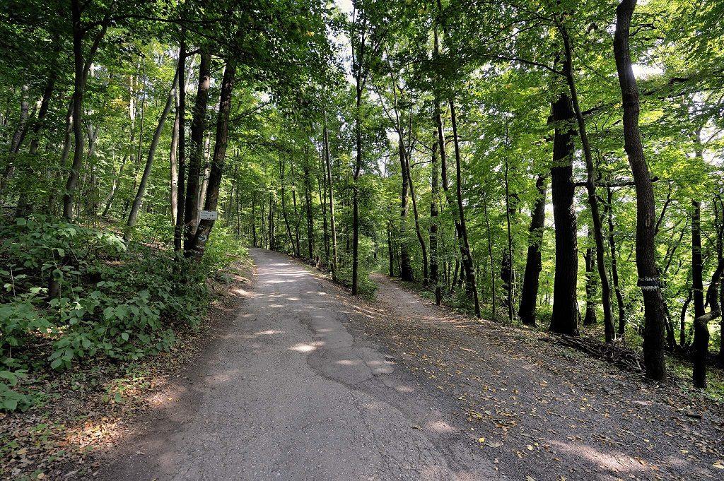 Wanderweg mit Schild durch den Wienerwald