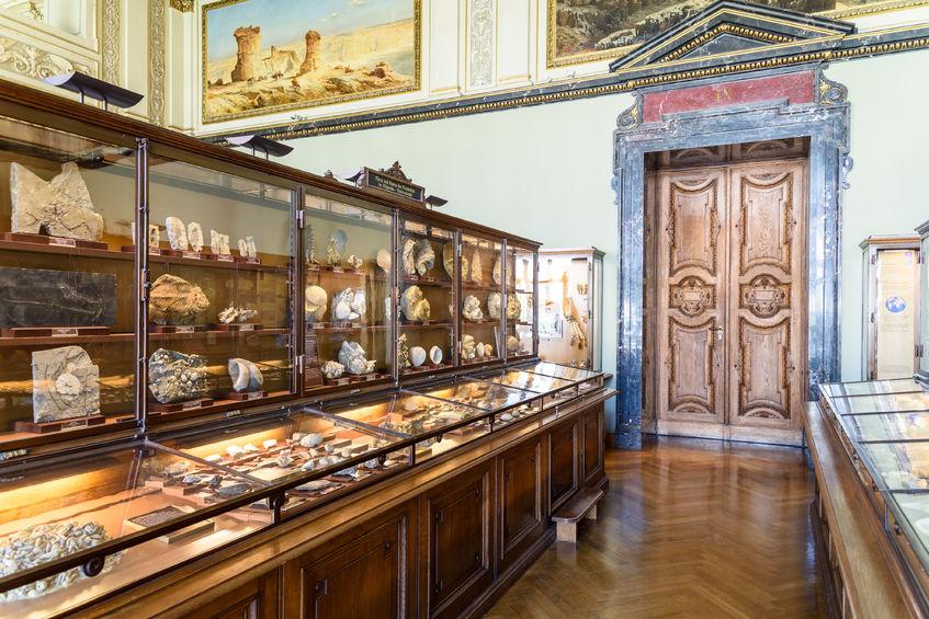 Schaukästen im Naturhistorischen Museum