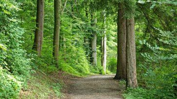 Waldwanderweg im Sommer