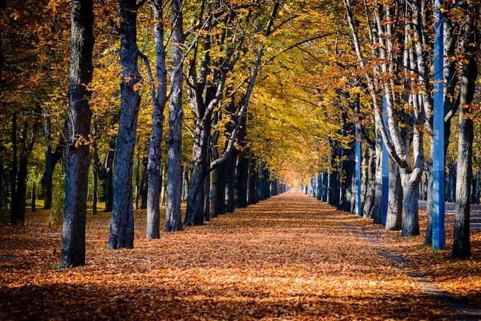 der grüne Prater mit einer Vielzahl an Bäumen im Herbst, mit Laub auf den Wegen
