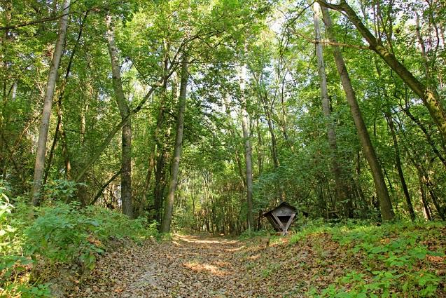 Wandern auf beblättertem Waldweg im Wienerwald