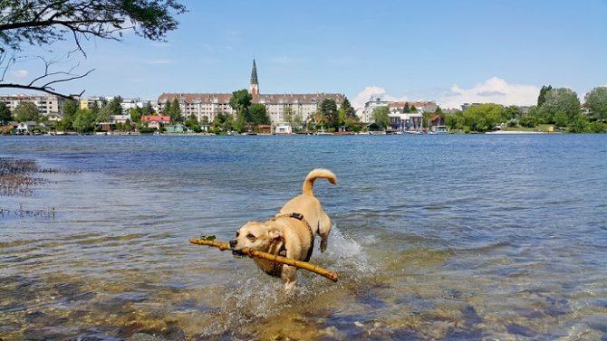 Hund im Wasser bei alter Donau, Donaupark in Floridsdorf
