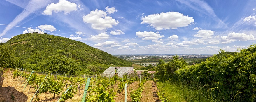View of the Danube of Vienna and the Saint Leopold's Church on Leopoldsberg. The Vineyards in front are from (viewpoint) Kahlenbergerdorf, a part of Döbling