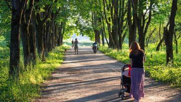 Mutter fährt mit Kinderwagen durch einen grünen Park
