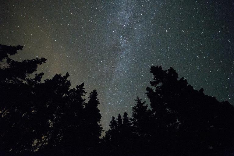 Milchstraße und dunkle Baumumrisse