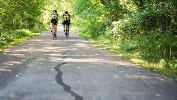 zwei sportliche Männer auf Fahrrädern unterwegs durch einen Waldfahrweg