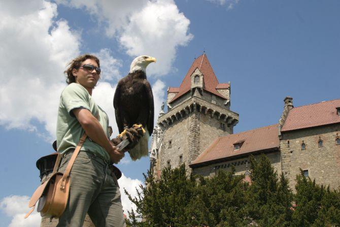 Adler sitze auf Hand einer Falknerin