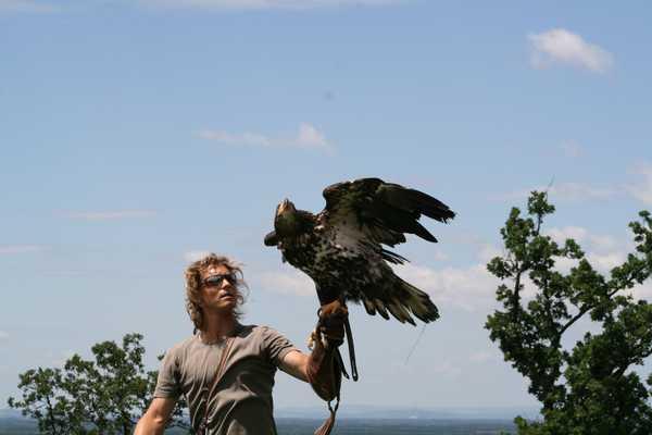 Falkner mit Adler auf der Hand