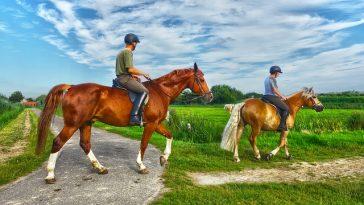 zwei Pferde mit Reitern marschieren von einer schmalen Straße auf einen schmalen Feldweg