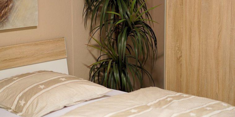 Zimmer in einer Unterkunft mit Bett und Zimmerpflanze