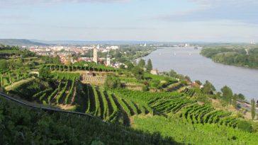 Blick auf die Stadt Krems von den Weinbergen