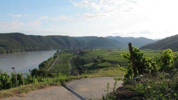 Unterwegs auf einem Weg mit Blick auf die Weingärten und die Donau