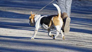 ein Hund an der Leine mit Herrchen unterwegs