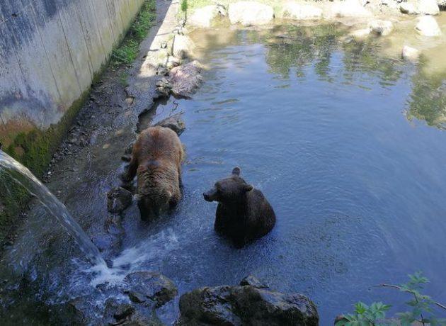 Zwei badende Bären im Tierpark
